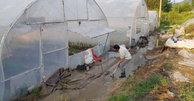 Tıkanan Kanalizasyon, Seraları Sular Altında Bıraktı