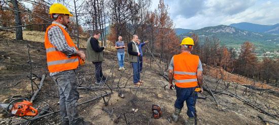 Yanan Ormanlık Alan Ağaçlandırılıyor